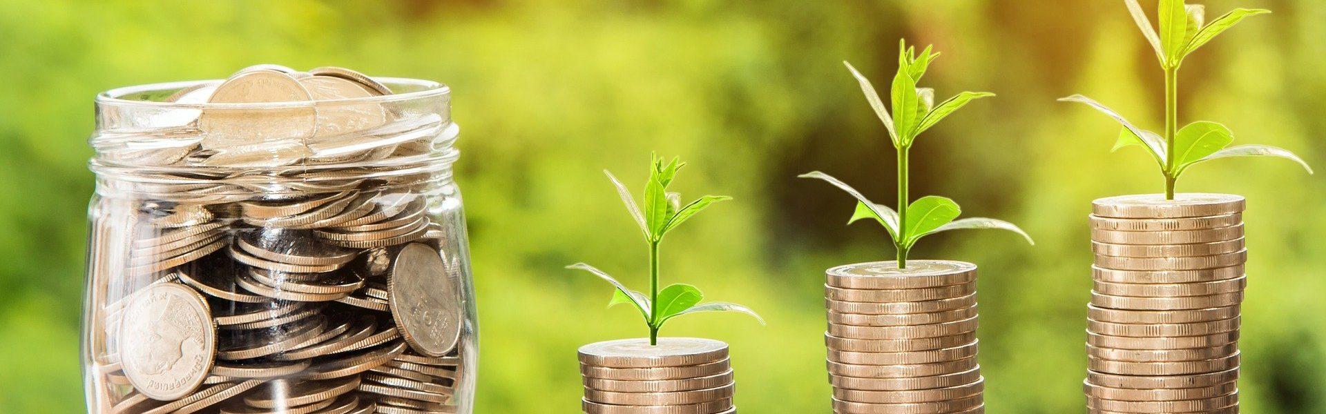 dinero y plantas